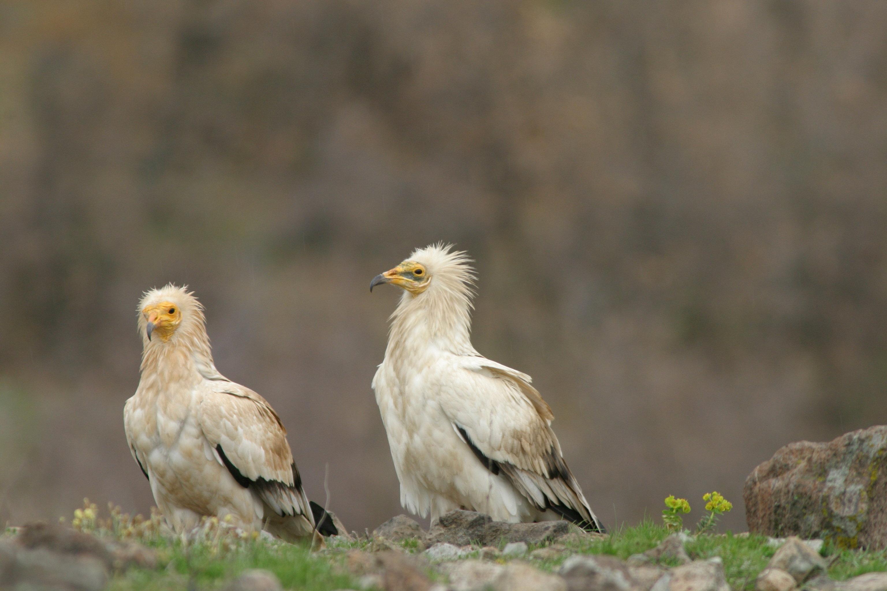 Архив Дружество за защита на хищните птици