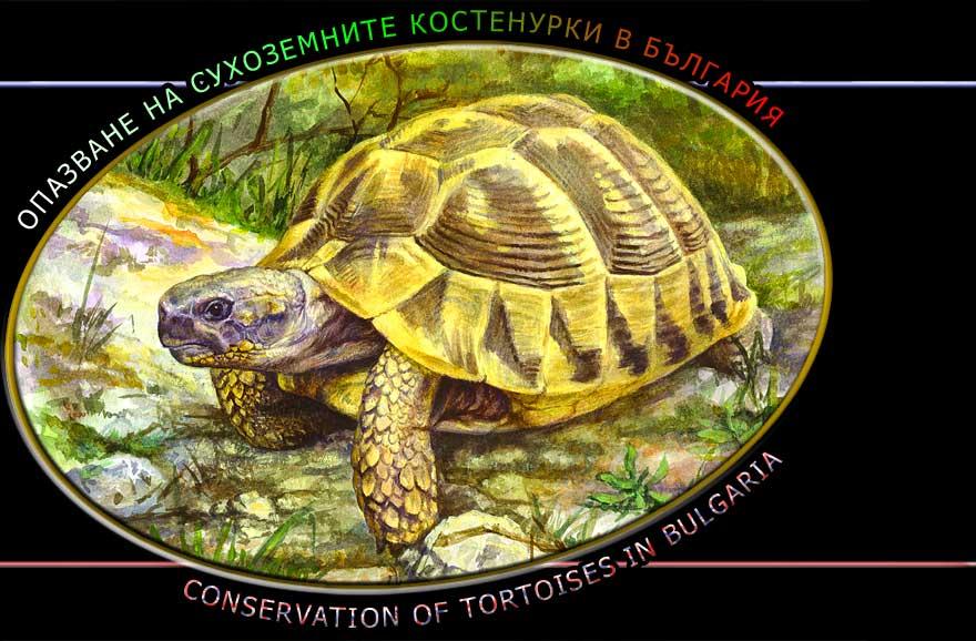 Опазване на сухоземните костенурки в България