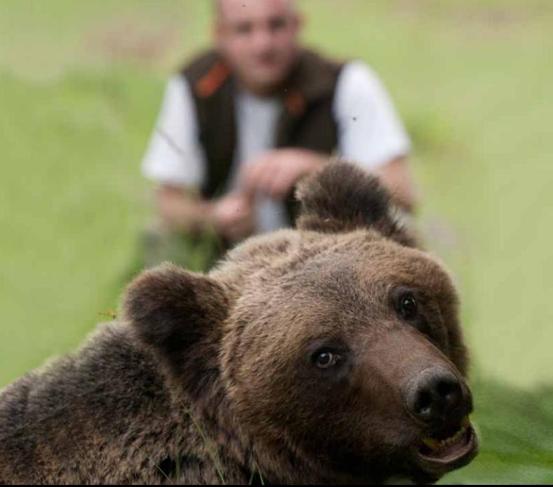 Становище във връзка с инцидента с мечката от Белица
