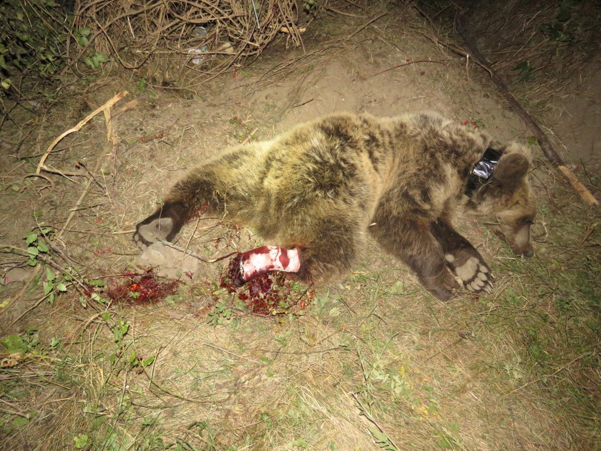 Становище на СДП БАЛКАНИ относно предлаганите промени в Закона за лова